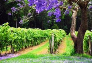 Bago Vineyards - Foster Accommodation