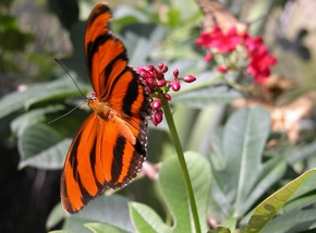 Butterfly Farm - Foster Accommodation