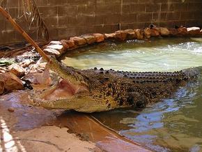 Wyndham Zoological Gardens and Crocodile Park - Foster Accommodation