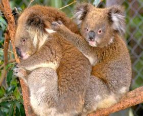 Shoalhaven Zoo - Foster Accommodation