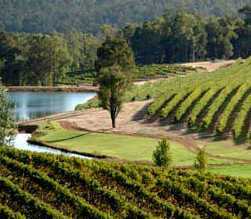 Brookhampton Estate Vineyard - Foster Accommodation