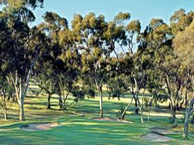 Tanunda Pines Golf Club - Foster Accommodation