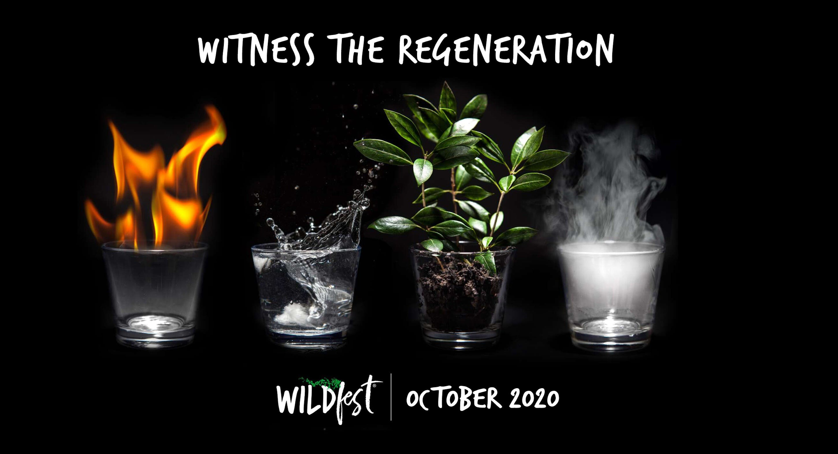 Wildfest - Annual Festival - Foster Accommodation