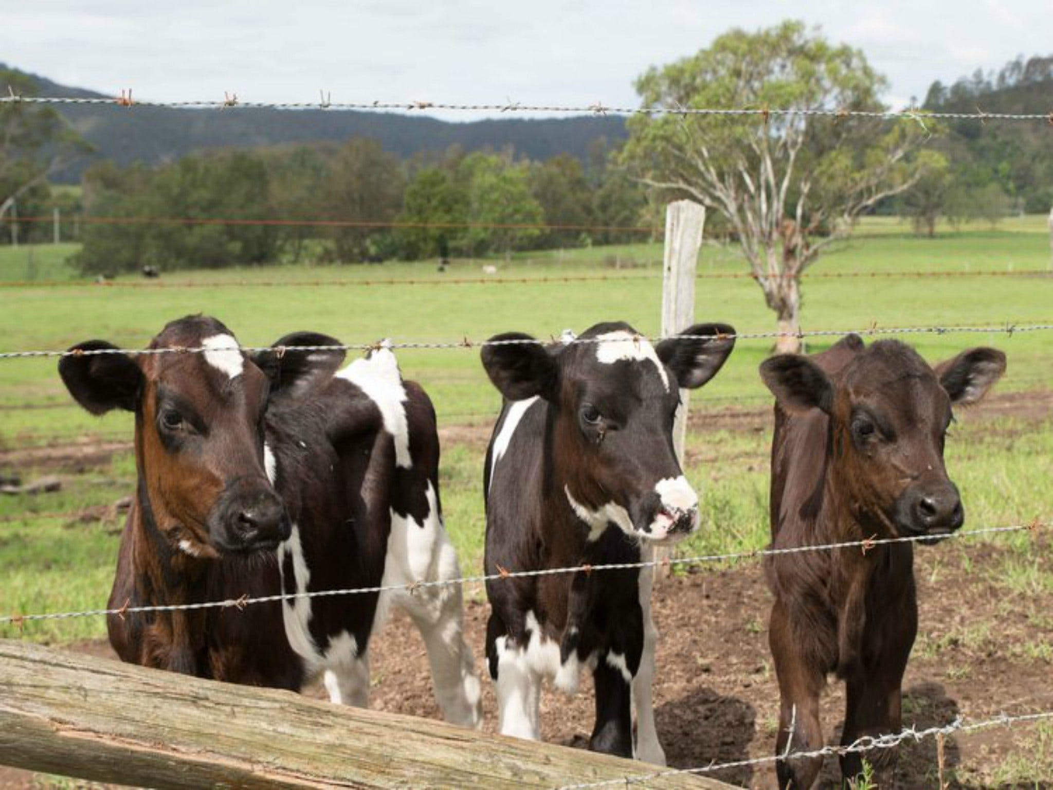Bandon Grove Farm Tours - Foster Accommodation